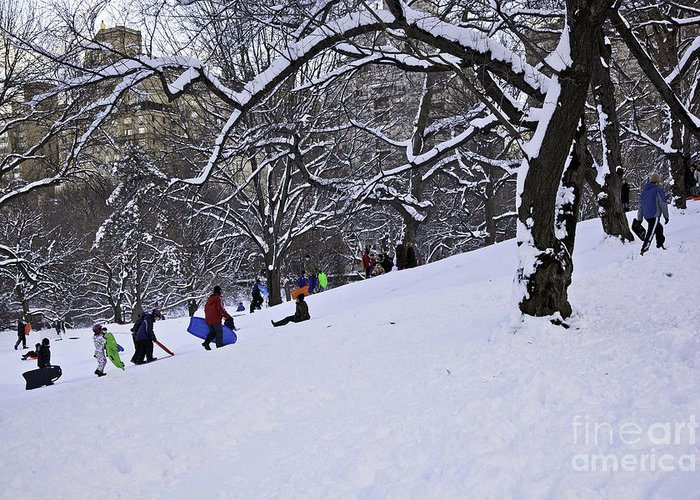 Owboards Greeting Card featuring the photograph Snow Day In The Park by Madeline Ellis
