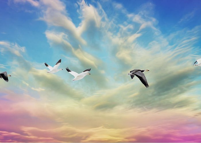Bird Greeting Card featuring the photograph Snow Geese Over New Melle by Bill Tiepelman