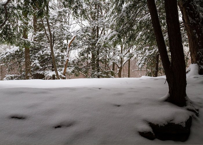 Snow Greeting Card featuring the photograph Snow In Shade by Tim Fitzwater