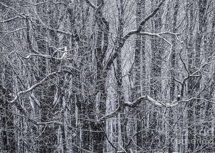 Snow Greeting Card featuring the photograph Snow In The Forest by Diane Diederich
