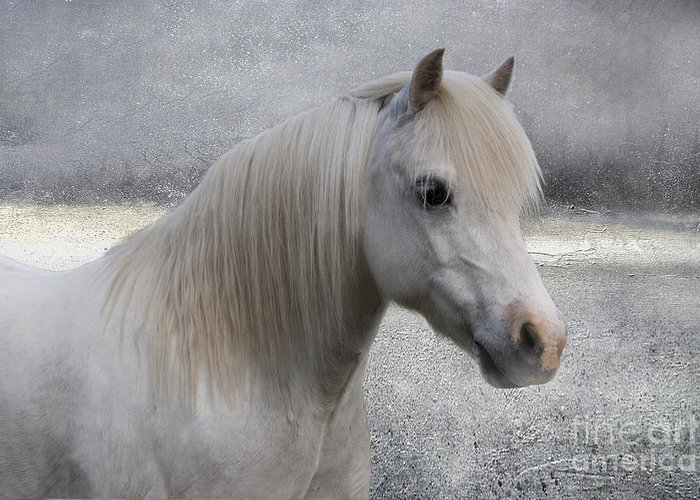 Pony Greeting Card featuring the photograph Snow Pony by Linda Lees