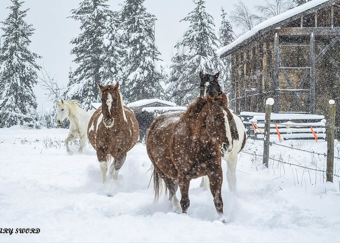 Horses Greeting Card featuring the photograph Snow Run by Mary Sword