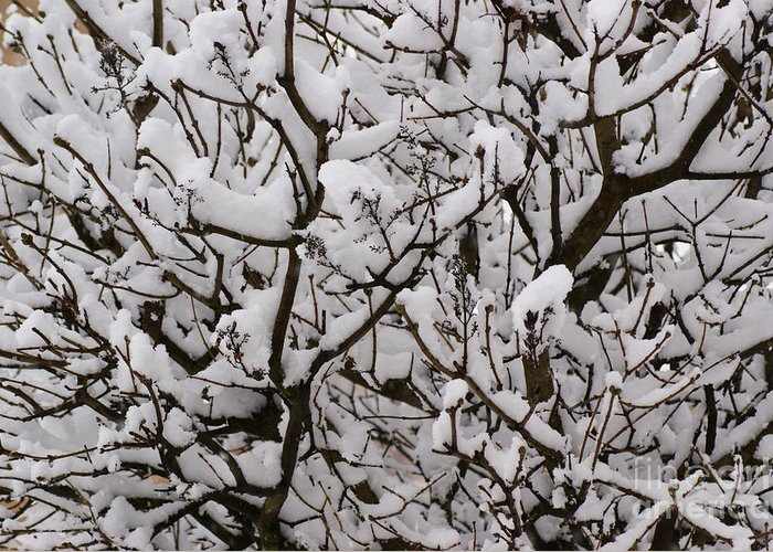 Snow Greeting Card featuring the photograph Snow Tree by Carol Lynch