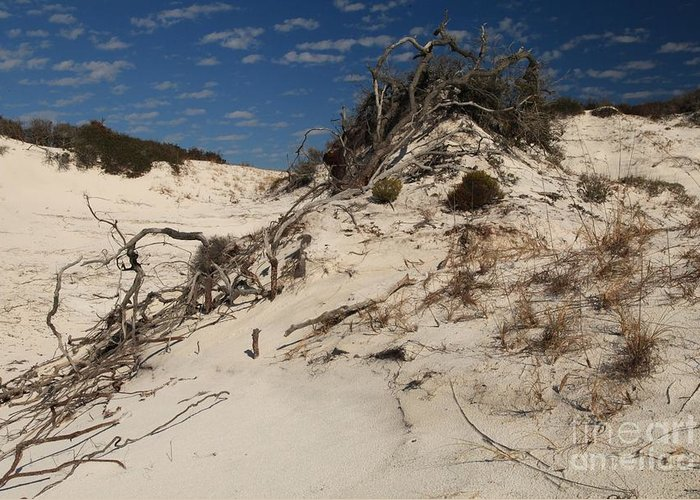 St Joseph Peninsula State Park Greeting Card featuring the photograph Snow White Dunes by Adam Jewell