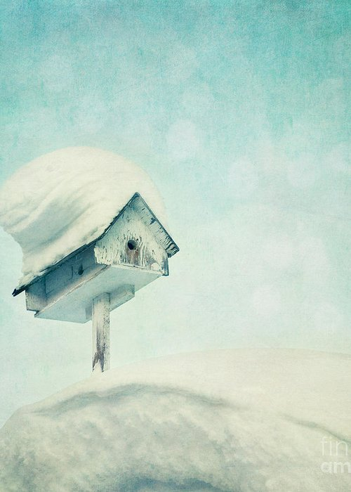 Snowbird Greeting Card featuring the photograph Snowbird's Home by Priska Wettstein