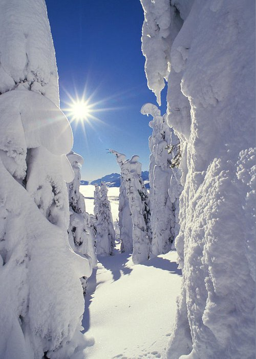 No People; Vertical; Outdoors; Day; Winter; Sun; Frozen; Cold; Tree; Idyllic; Tranquility; Scenics; Beauty In Nature; Clear Sky; Covered; White; Blue; Sunbeam Greeting Card featuring the photograph Snowscape Snow Covered Trees And Bright Sun by Anonymous
