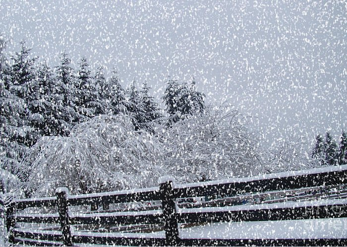 Snow Prints Greeting Card featuring the photograph Snowstorm Coming by Beverly Guilliams