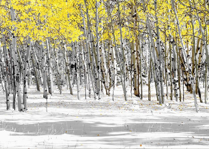 Aspen Trees Greeting Card featuring the photograph Snowy Aspen Landscape by The Forests Edge Photography - Diane Sandoval