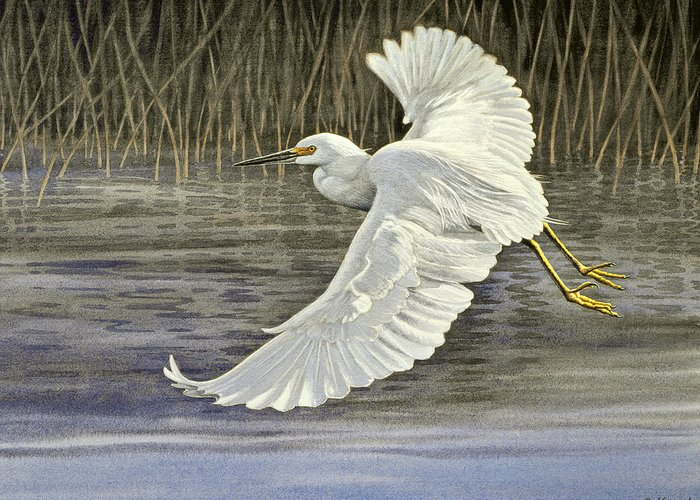 Egret Greeting Cards