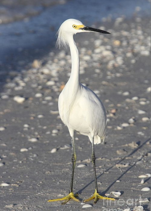 Snowy Egret Greeting Card featuring the photograph Snowy Egret Pose by Christiane Schulze Art And Photography