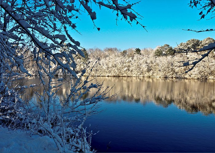 Landscape Greeting Card featuring the photograph Snowy Morning by Cami Amick
