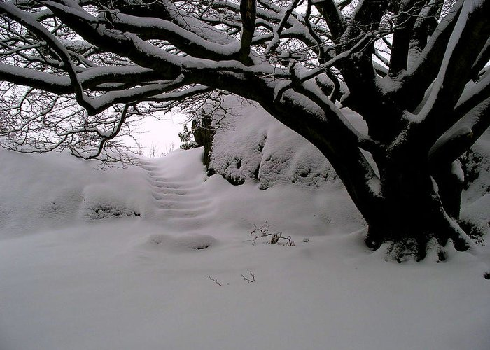 Snow Greeting Card featuring the photograph Snowy Path by Amanda Moore