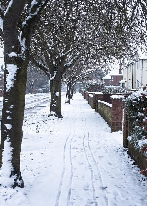 Avenue Greeting Card featuring the photograph Snowy Path by Tom Gowanlock