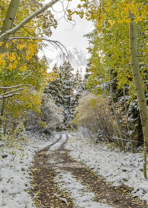 Aspen Trees Greeting Card featuring the photograph Snowy Road In Fall by Jeff Stoddart