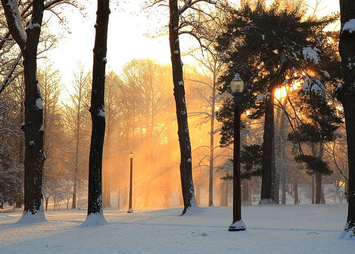 Tower Grove Greeting Card featuring the photograph Snowy Sunrise In Tower Grove Park by Scott Rackers