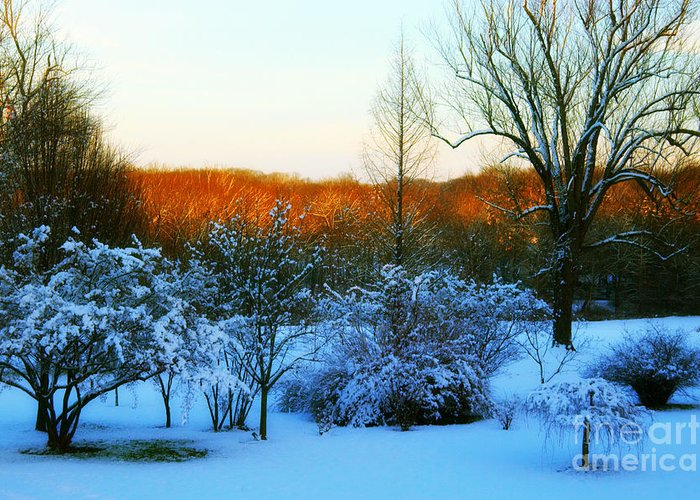 Snow Greeting Card featuring the photograph Snowy Trees In December Twilight - Pearl S. Buck Homestead by Anna Lisa Yoder