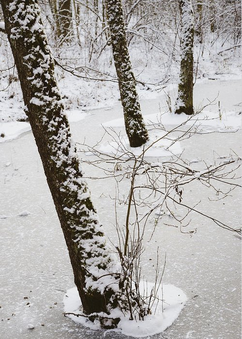 Trees Greeting Card featuring the photograph Snowy Trees In Frozen Pond - Winter Forest by Matthias Hauser