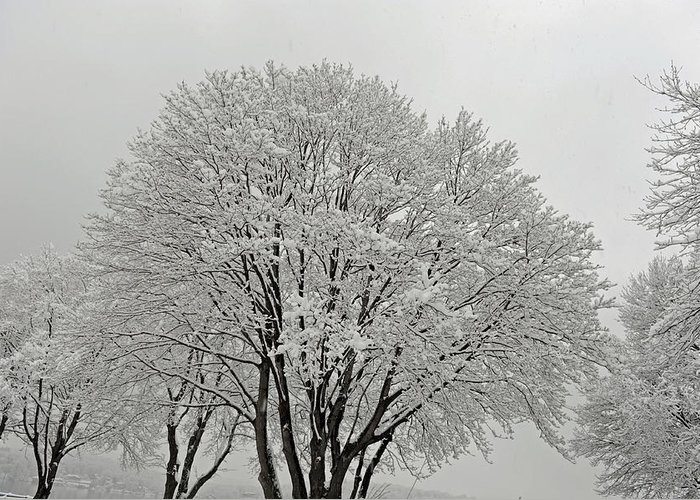 Snow Greeting Card featuring the photograph Snowy Trees by Richard Bryce and Family
