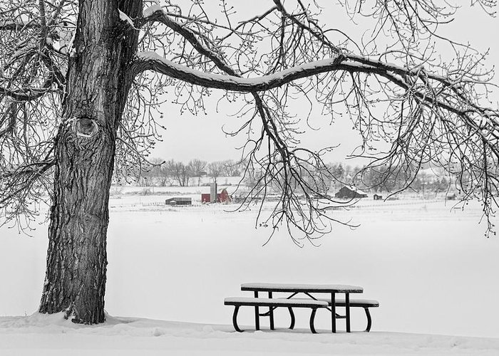 Snow Greeting Card featuring the photograph Snowy Winter Country Cottonwood Tree View Bwsc by James BO Insogna