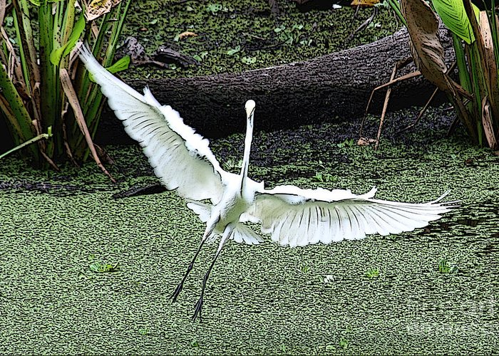 Egret Greeting Card featuring the photograph So Happy by Rosemary Aubut