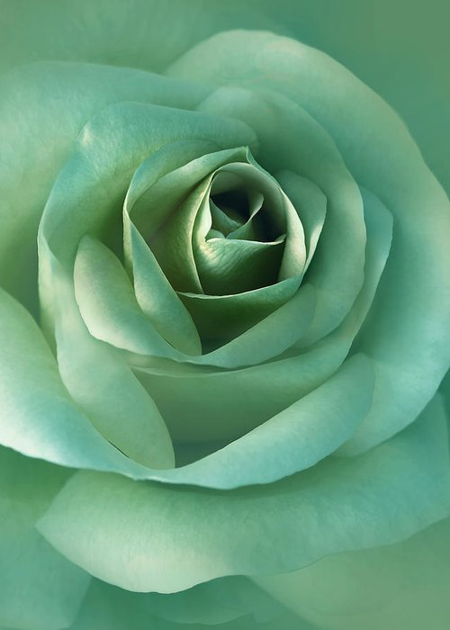 Rose Greeting Card featuring the photograph Soft Emerald Green Rose Flower by Jennie Marie Schell