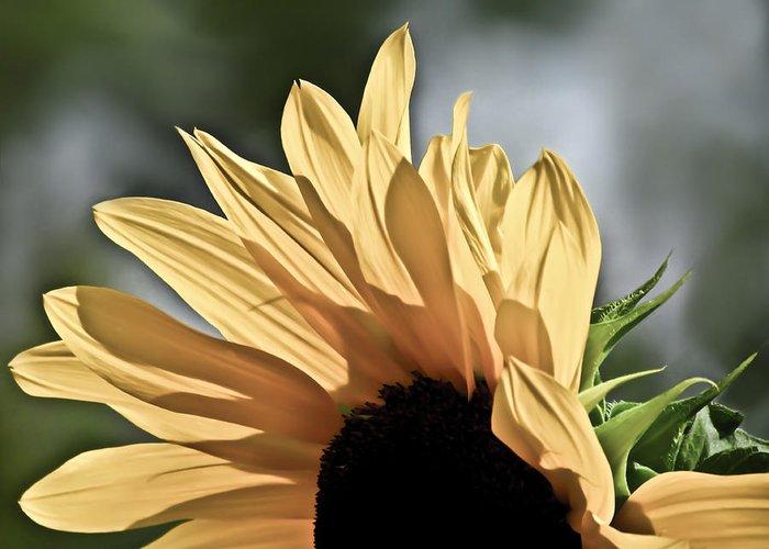 Sunflower Greeting Card featuring the photograph Soft Sunny Sunflower by Eva Kondzialkiewicz