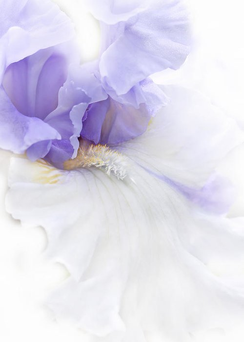 Iris Greeting Card featuring the photograph Softness Of A Lavender Iris Flower by Jennie Marie Schell