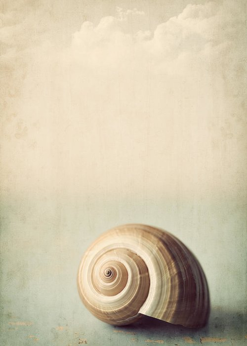 Shell Greeting Card featuring the photograph Sojourn by Amy Weiss