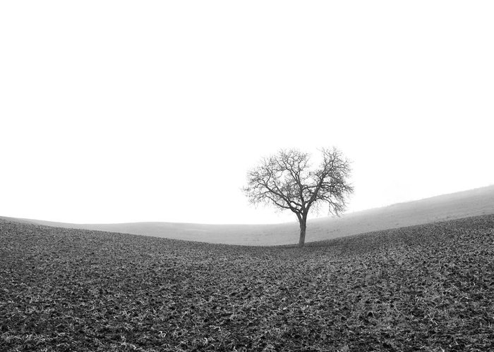 Wintry Greeting Card featuring the photograph Solitary Tree In Winter. Auvergne. France by Bernard Jaubert