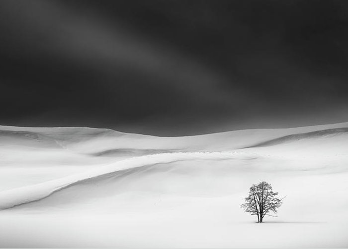Snow Greeting Card featuring the photograph Solitude by Huibo Hou