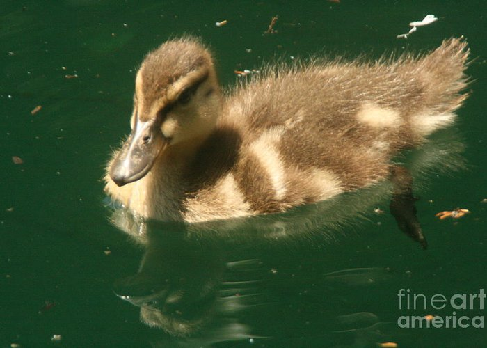 Duck Greeting Card featuring the photograph Someone Following Me by Linda Walker