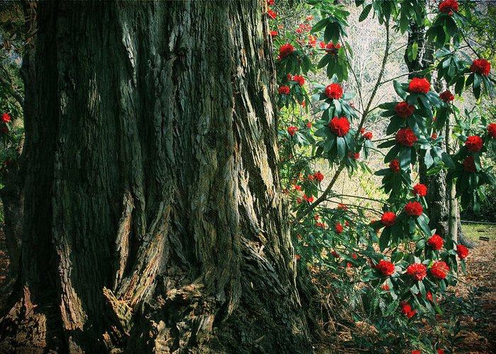 Uc Berkeley Botanical Garden Greeting Card featuring the photograph Sometimes Life Is Sweet by Laurie Search
