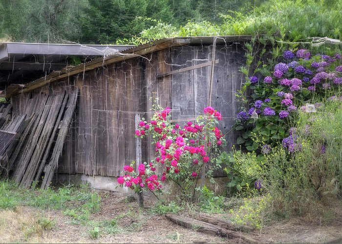 Barn Greeting Card featuring the photograph Somewhere Near Geyserville Ca by Joan Carroll
