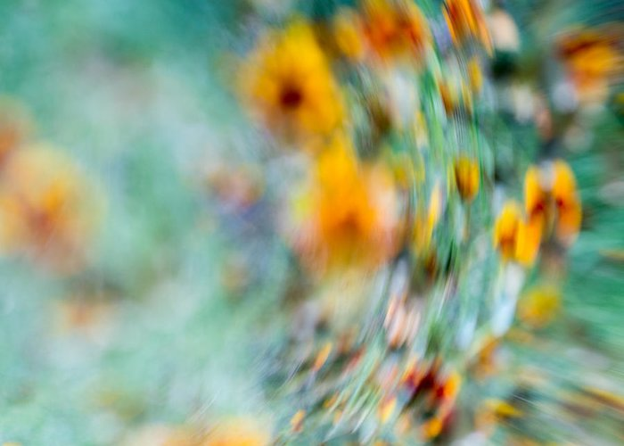 Floral Abstract Greeting Card featuring the photograph Sonic by Darryl Dalton