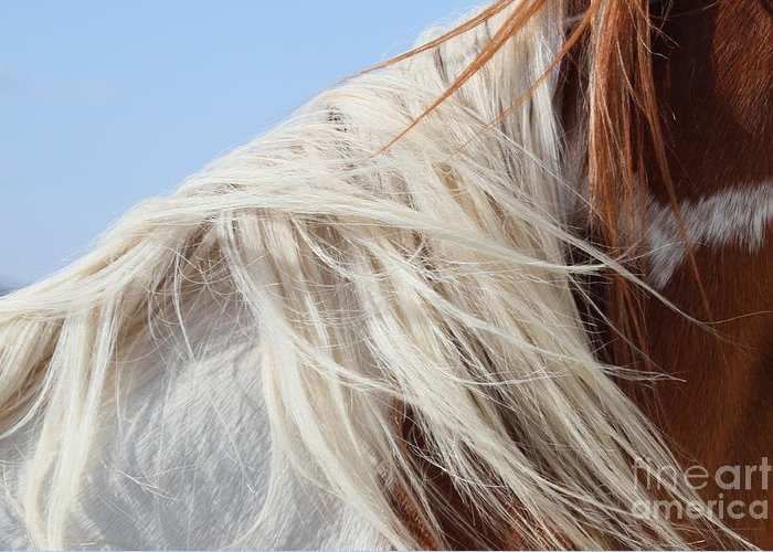 Horse Greeting Card featuring the photograph Sonny's Mane by Ashley M Conger