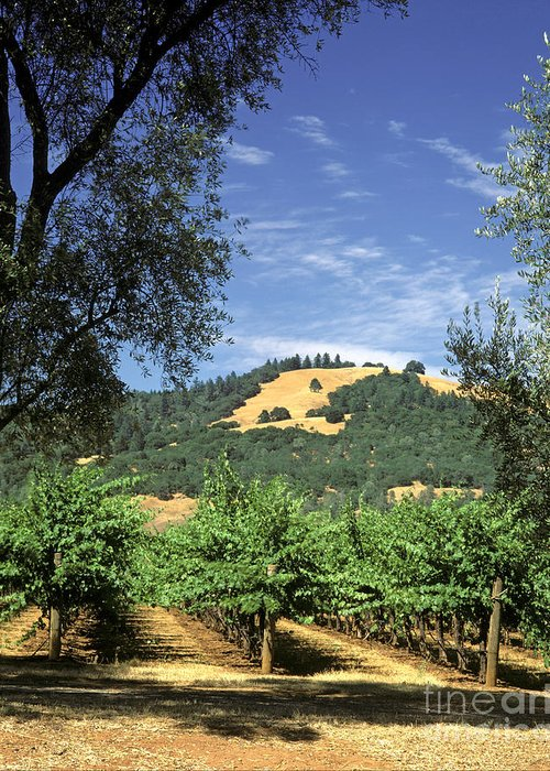 Craig Lovell Greeting Card featuring the photograph Sonoma Valley Vineyard by Craig Lovell