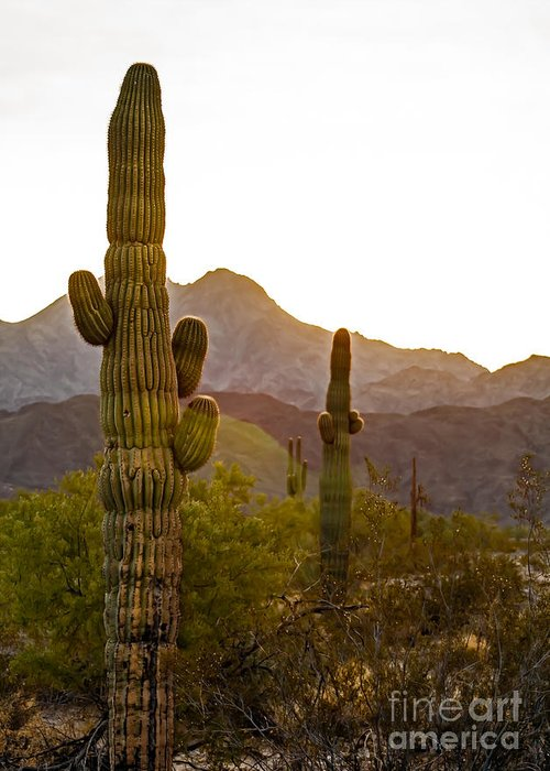 Cactus Greeting Card featuring the photograph Sonoran Desert II by Robert Bales