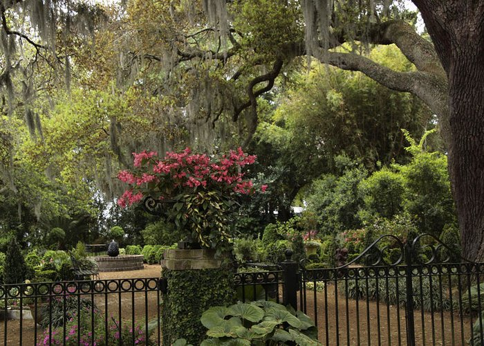 Nature Greeting Card featuring the photograph Southern Charm by Tasha ONeill