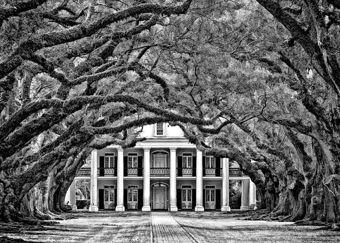 Oak Alley Plantation Greeting Card featuring the photograph Southern Class Monochrome by Steve Harrington