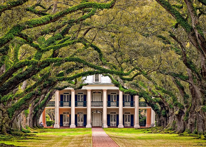 Oak Alley Plantation Greeting Card featuring the photograph Southern Class by Steve Harrington