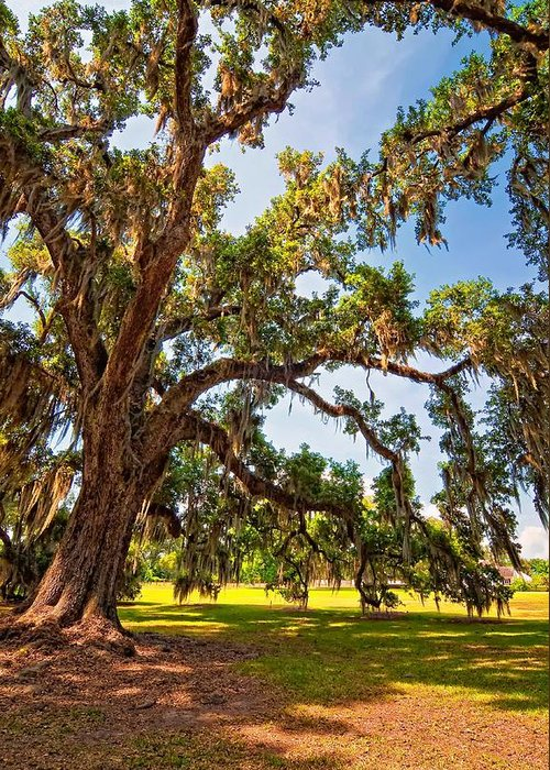 Evergreen Plantation Greeting Card featuring the photograph Southern Comfort by Steve Harrington