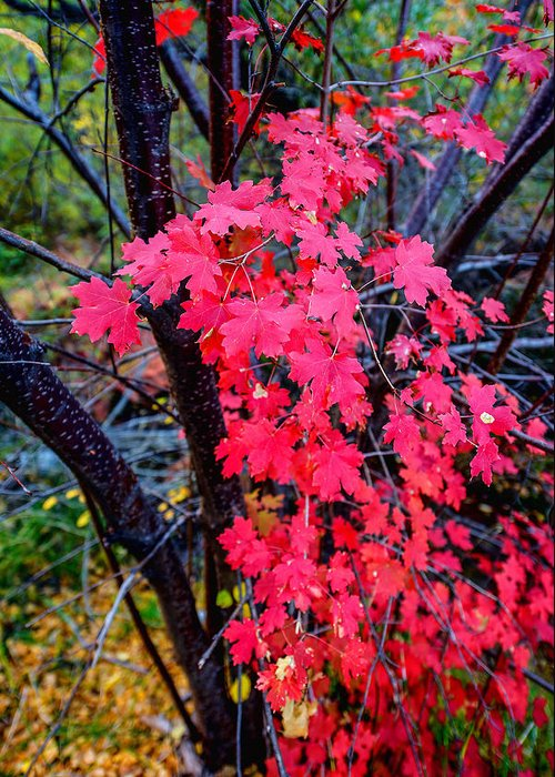 Fall Greeting Card featuring the photograph Southern Fall by Chad Dutson