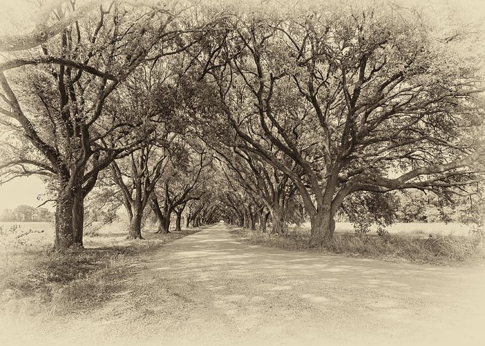 Oak Alley Greeting Card featuring the photograph Southern Journey Sepia by Steve Harrington