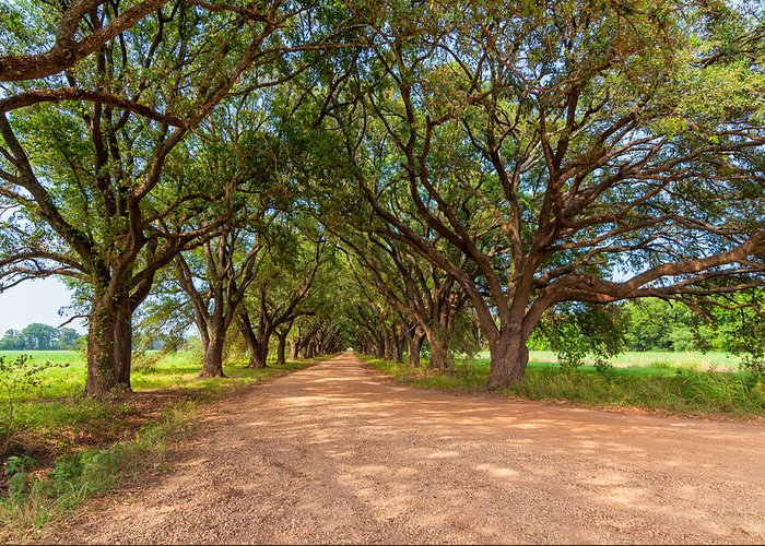 Oak Alley Greeting Card featuring the photograph Southern Journey by Steve Harrington