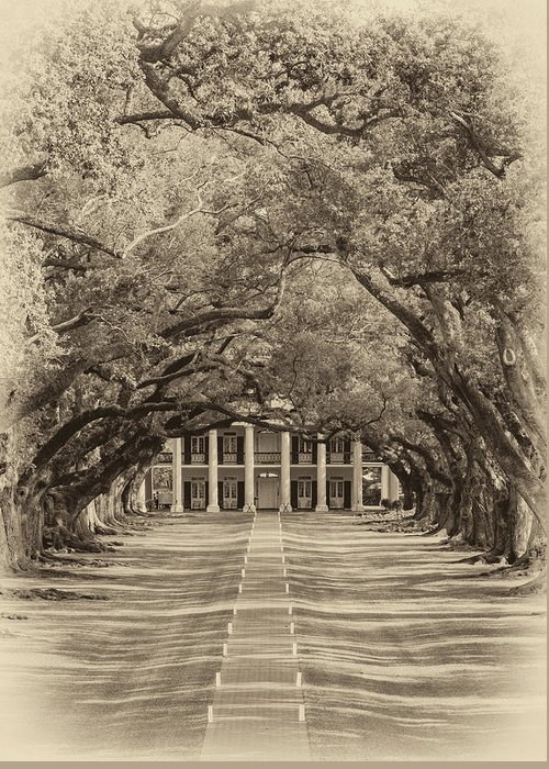 Oak Alley Plantation Greeting Card featuring the photograph Southern Time Travel Sepia by Steve Harrington