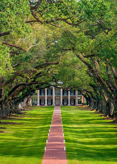 Oak Alley Plantation Greeting Card featuring the photograph Southern Time Travel by Steve Harrington