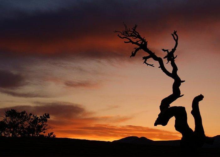 Landscape Greeting Card featuring the photograph Southwest Tree Sunset by Michael J Bauer