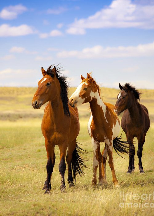 Wild Horses Navajo Indian Reservation Greeting Card featuring the photograph Southwest Wild Horses On Navajo Indian Reservation by Jerry Cowart