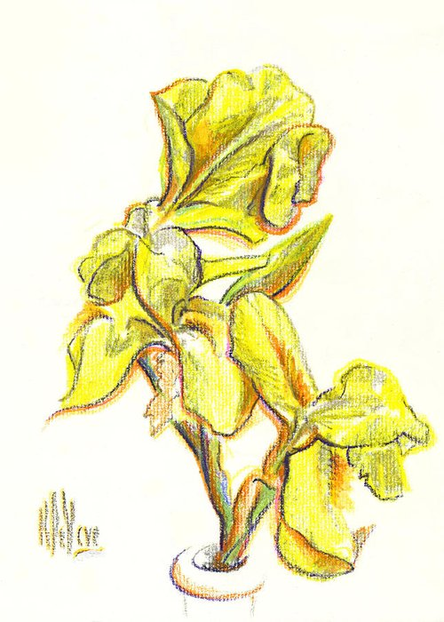 Spanish Irises Greeting Card featuring the painting Spanish Irises by Kip DeVore