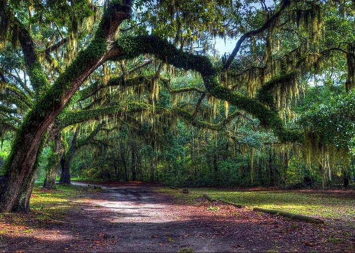 Spanish Moss Greeting Card featuring the photograph Spanish Moss by Mel Steinhauer
